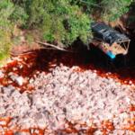Venezuela: důsledky ilegální těžby zlata